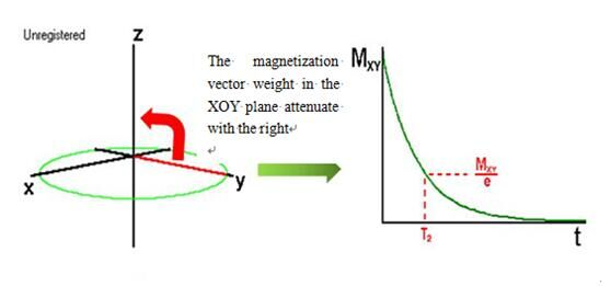 The magnetization vector weight in the XOY plane attenuate with the right